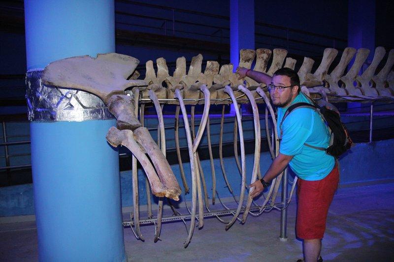 можно обняться с доисторическим скелетом