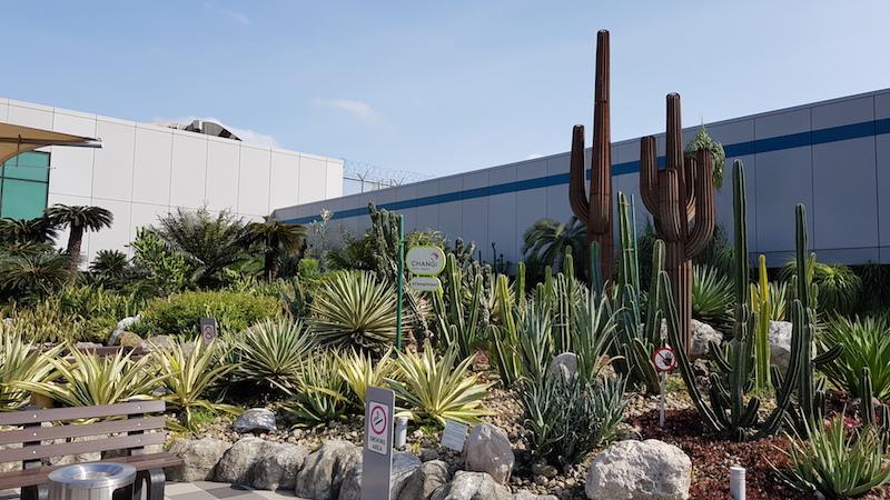 Например, тут есть сад кактусов