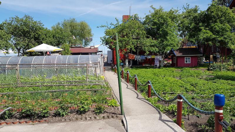 На заднем дворе прямо за зоной с кухней и столами чуваки выращивают овощи для подачи к столу