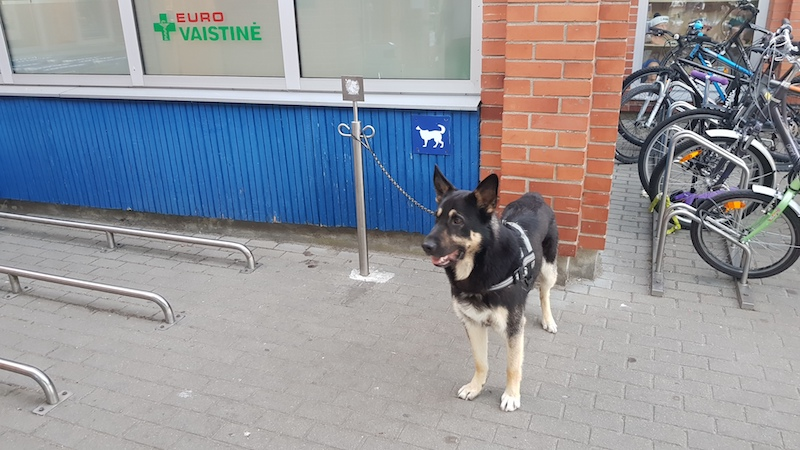 Специальное место для парковки собак около магазина