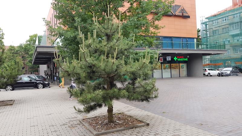 Классная елка около супермаркета